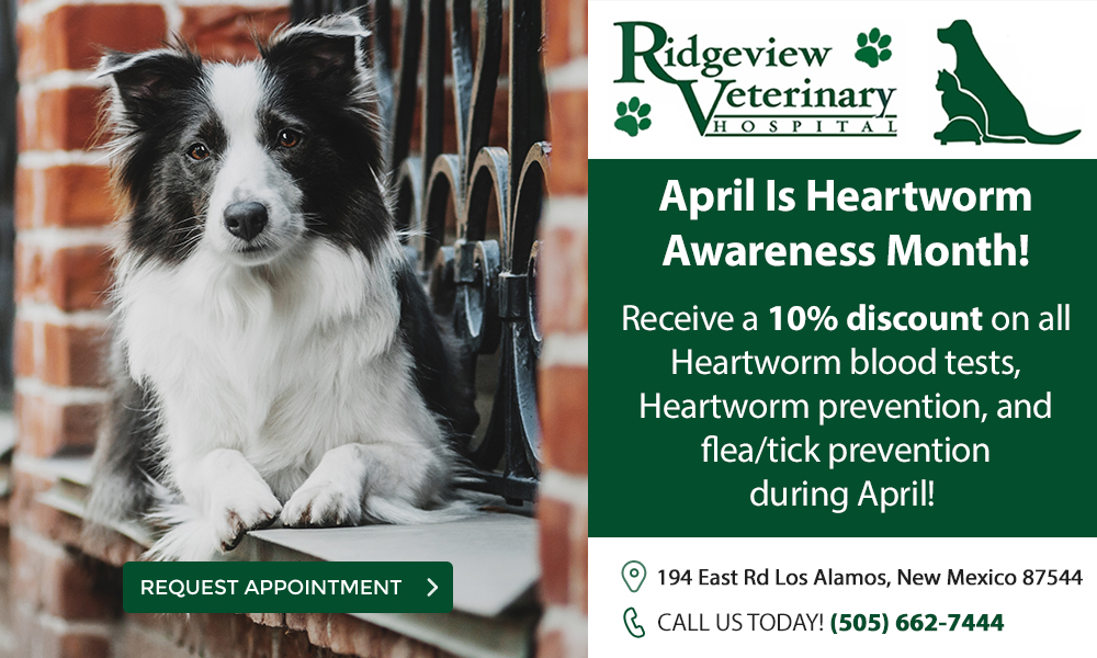 Ridgeview Veterinary Hospital Heartworm Special